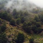 Nebel 2, 2002