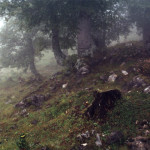 Nebel 3, 2002