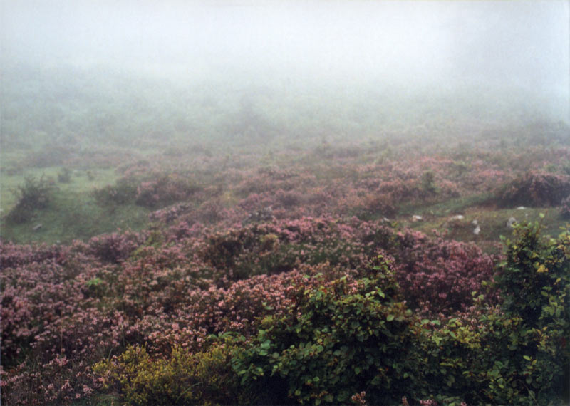 Nebel 5, 2002