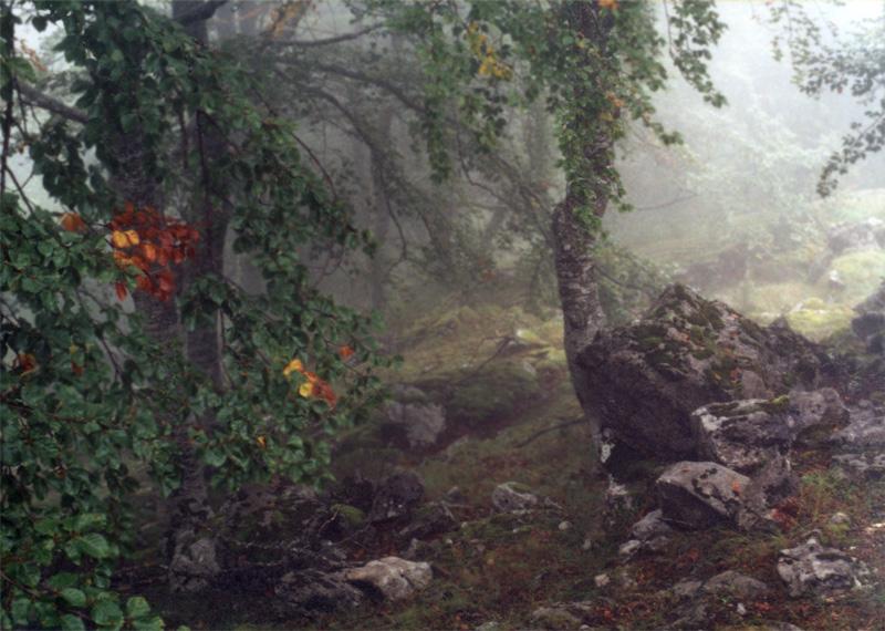 Nebel 6, 2002