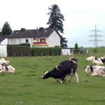 Deutschland 1, 2012